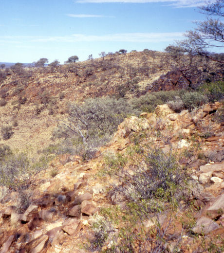 Jack hill - Australie